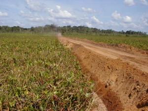Sand road across swamp